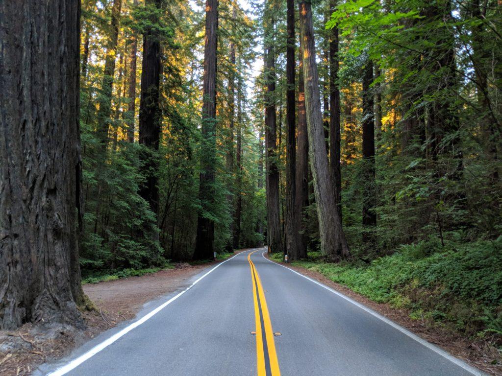 Road along Humboldt Redwoods State Park