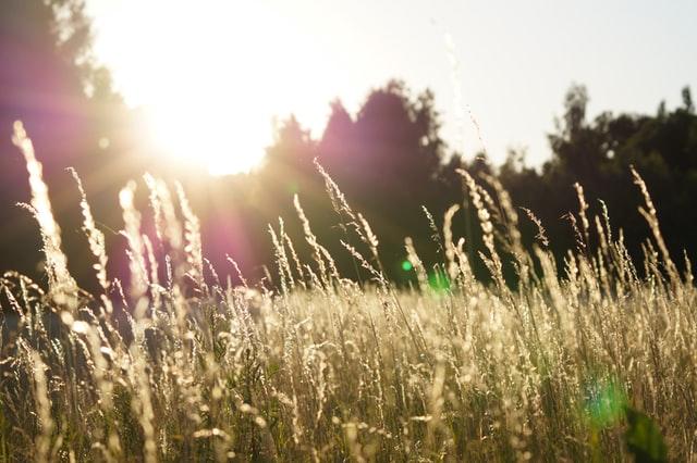Sunshine through grass