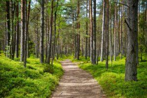 Spiritual Pilgrimage